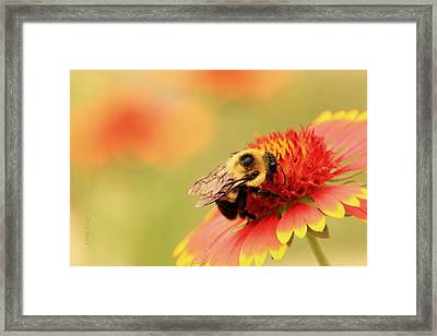 Framed Print featuring the photograph Busy Bumblebee by Chris Berry