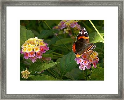 Framed Print featuring the photograph Busy Butterfly Side 1 by Felipe Adan Lerma
