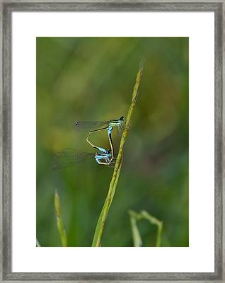Busy Damsels Framed Print