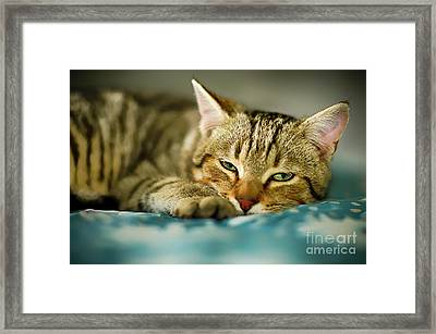 Busy Day Framed Print by Alessandro Giorgi Art Photography