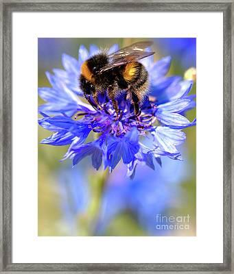 Busy Little Bee Framed Print