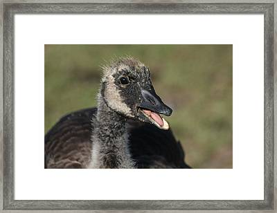 Busy Talking Framed Print