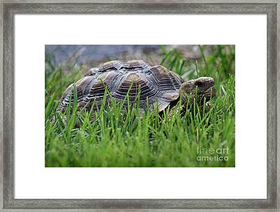 But He Has A Great Personality Framed Print