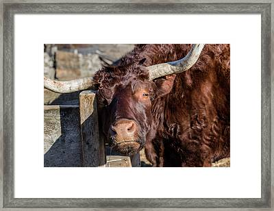 But I Am Smiling Framed Print by Bruce Coulter