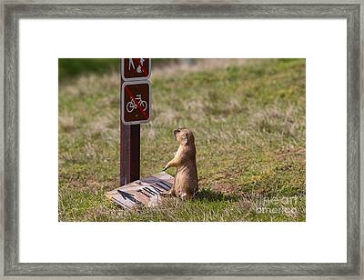 But I Drove 300 Miles To Ride This Trail Framed Print by Scott Nelson