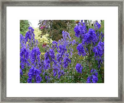 Butchart Gardens Blues Framed Print