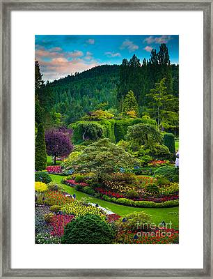 Butchart Gardens Sunset Framed Print by Inge Johnsson