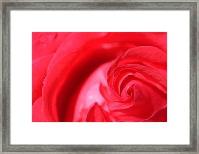 Butler Rose Framed Print