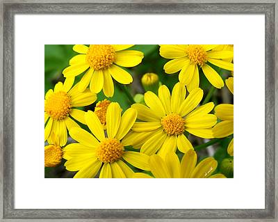Butter Fields Framed Print by Ed Smith
