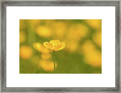 Butter Wouldnt Melt Framed Print