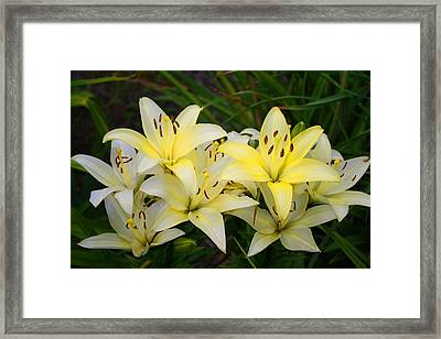Framed Print featuring the photograph Buttercreams by Kathryn Meyer