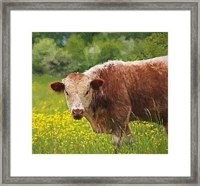 Buttercup - Brown Cow Framed Print