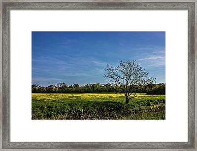 Buttercup Fields Framed Print