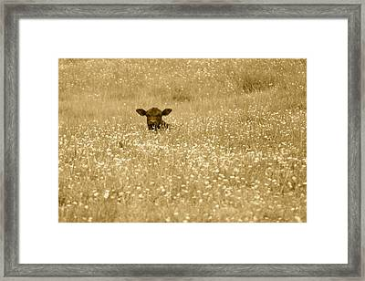 Buttercup In Sepia Framed Print