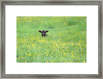 Buttercup Framed Print by JD Grimes