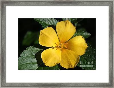 Buttercup Sunshine Framed Print