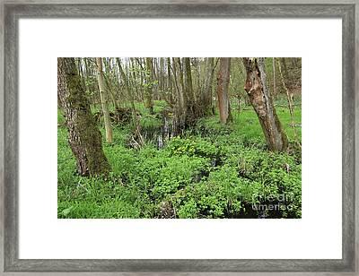 Buttercups In Wetlands Framed Print by Michal Boubin