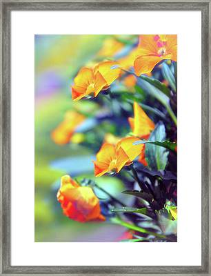 Framed Print featuring the photograph Buttercups by Jessica Jenney