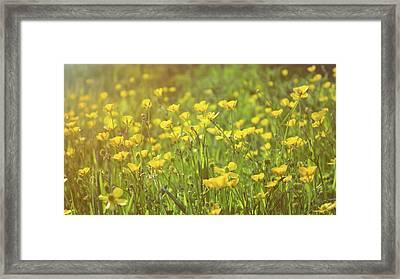 Buttercups Framed Print by Martin Newman