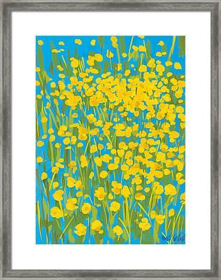 Buttercups Framed Print by Sarah Gillard