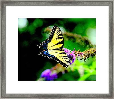 Butterflie Framed Print by Aron Chervin