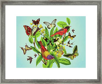 Butterflies And Birds On Plant And Flower Stem Framed Print
