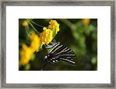 Butterflies And Blooms Framed Print