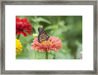 Butterflies And Blossoms Framed Print by Bill Cannon