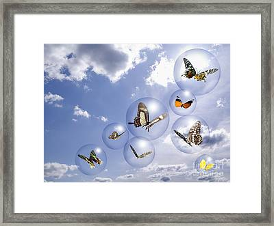 Butterflies And Bubbles Framed Print