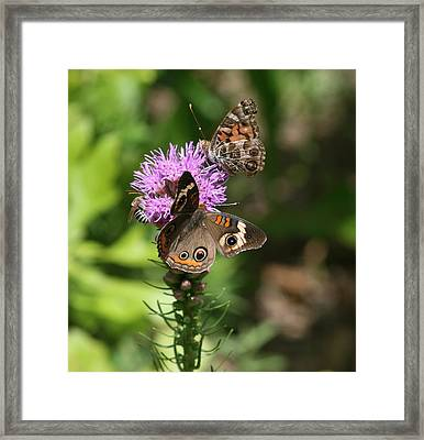 Butterflies And Purple Flower Framed Print by Cathy Harper