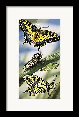 Larvae Framed Prints