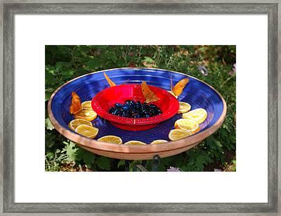 Butterflies Enjoying A Meal Framed Print by Susan Heller