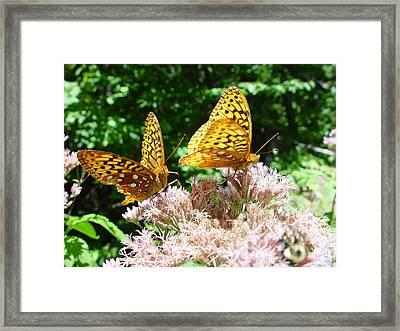 Butterflies Framed Print by Eric Workman