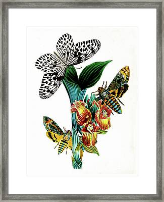Butterflies, Moths And Orchids, Vintage Botanical Painting Framed Print