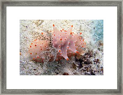 Framed Print featuring the photograph Butterflies Of The Sea by Joerg Lingnau