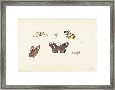 Butterflies Framed Print by Pieter Withoos