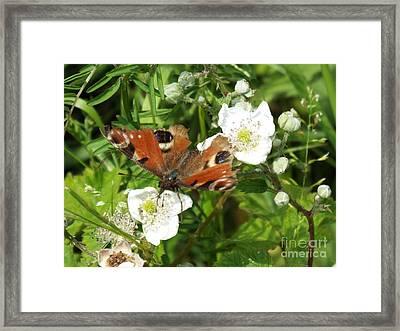 Butterflower Framed Print