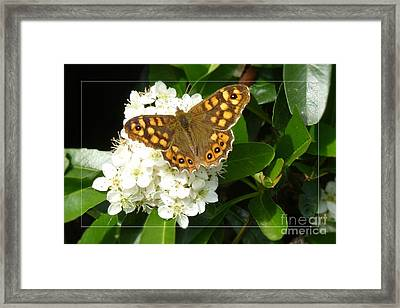 Framed Print featuring the photograph Butterfly 1 by Jean Bernard Roussilhe