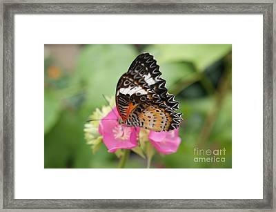 Butterfly 1 Framed Print by Tina McKay-Brown
