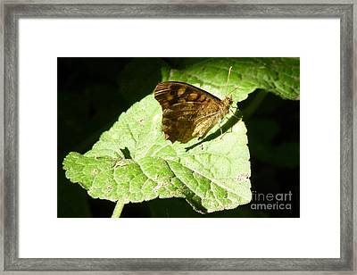 Framed Print featuring the photograph Butterfly 2 by Jean Bernard Roussilhe