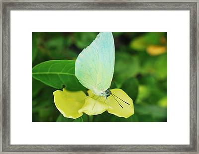 Butterfly 2 Framed Print by Susette Lacsina