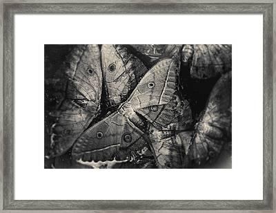 Butterfly #2056 Framed Print