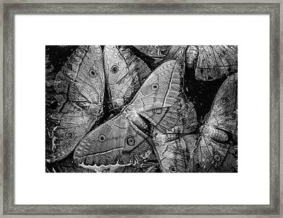 Butterfly #2056 Bw Framed Print