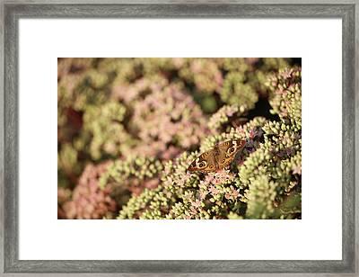 Butterfly 3d Framed Print
