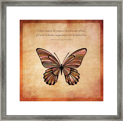 Butterfly 7 Framed Print