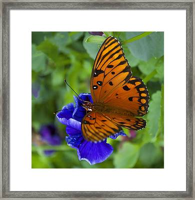 Butterfly 8-2 Framed Print by Skip Willits