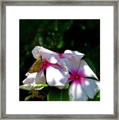 Butterfly 8-3 Framed Print by Skip Willits