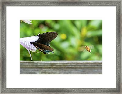 Butterfly And Bee Framed Print