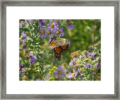 Butterfly And Blue Framed Print by Deborah Dallinga