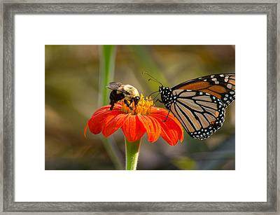 Framed Print featuring the photograph Butterfly And Bumble Bee by Willard Killough III